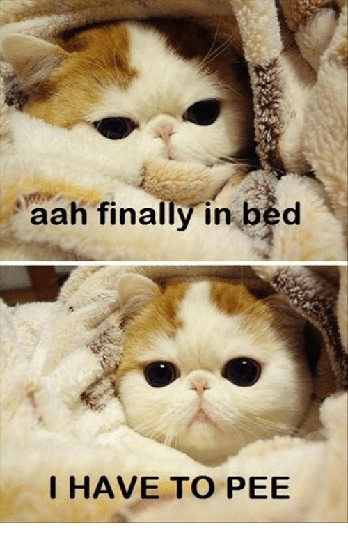 Cat pees on bed all the time