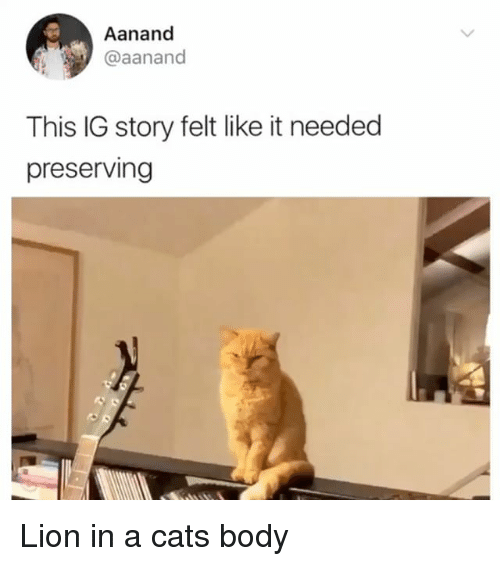Cats, Memes, and Lion: Aanand  @aanand  This IG story felt like it needed  preserving Lion in a cats body