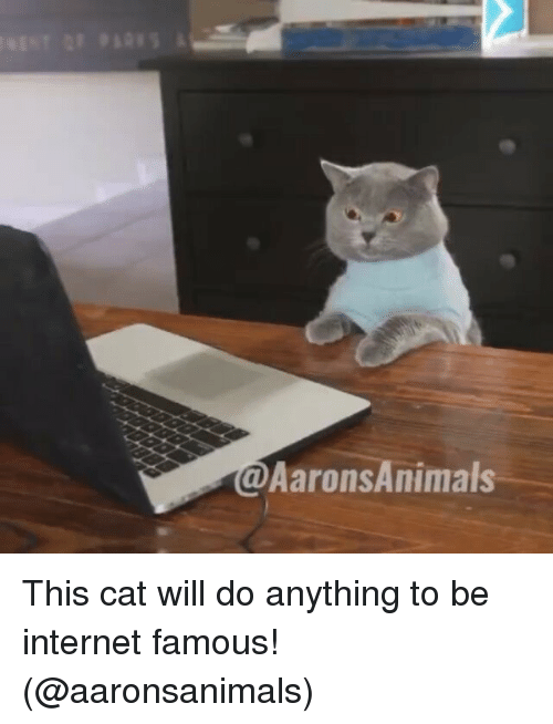 Cats, Internet, and Memes: Aarons Animals This cat will do anything to be internet famous! (@aaronsanimals)