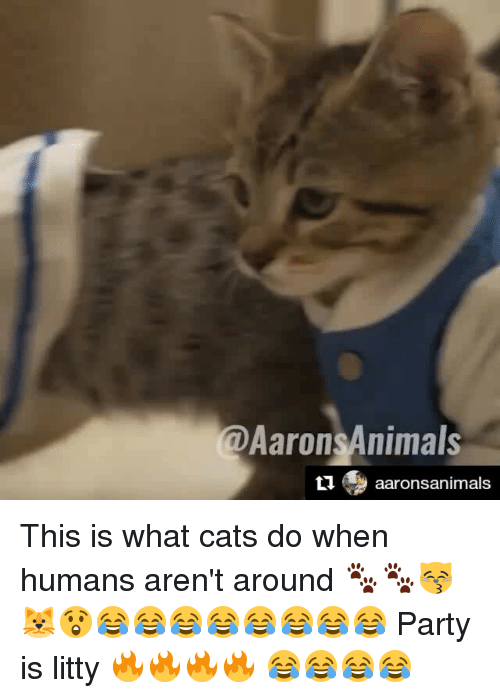 Memes, 🤖, and Humanism: @Aarons Animals  ti aarons animals This is what cats do when humans aren't around 🐾🐾😽🐱😲😂😂😂😂😂😂😂😂 Party is litty 🔥🔥🔥🔥 😂😂😂😂