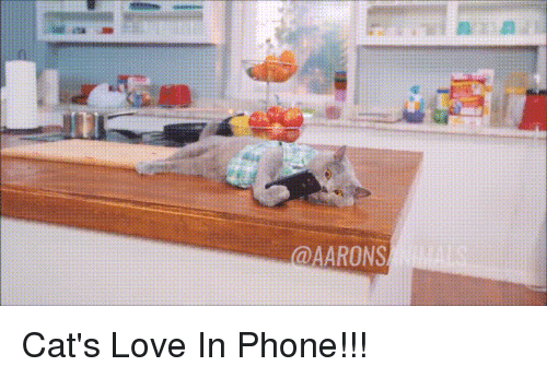 Cats, Love, and Phone: @AARONS Cat's Love In Phone!!!