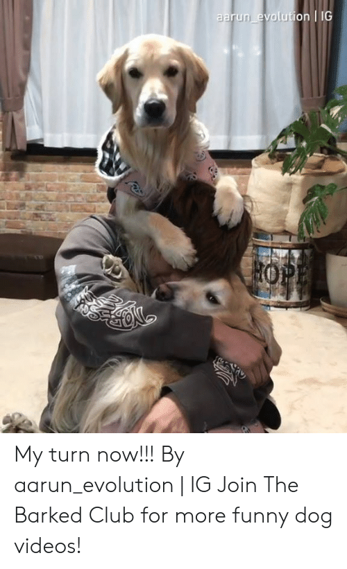 More Funny: aarun evolution IG My turn now!!! By aarun_evolution | IG  Join The Barked Club for more funny dog videos!