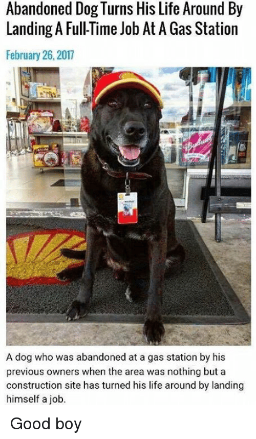 Memes, Gas Station, and 🤖: Abandoned Dog Turns His Life Around By  Landing A FullTime Job At A Gas Station  February 26, 2017  A dog who was abandoned at a gas station by his  previous owners when the area was nothing but a  construction site has turned his life around by landing  himself a job. Good boy