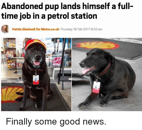 Funny, News, and Good: Abandoned pup lands himself a full-  time job in a petrol station  Hattie Gladwell for Metro.co.uk Thursday 16 Feb 20179:05 am Finally some good news.
