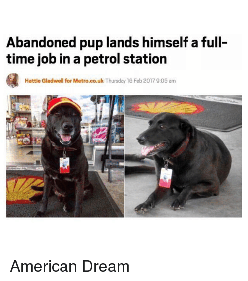 Funny: Abandoned pup lands himself afull-  time job in a petrol station  Hattie Gladwell for Metro.co.uk Thursday 16 Feb 2017 9:05 am American Dream