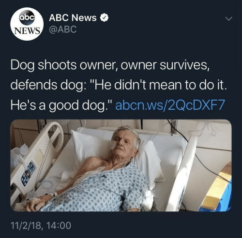 """Abc News: abc  ABC News  NEWS @ABC  Dog shoots owner, owner survives,  defends dog: """"He didn't mean to do it.  He's a good dog."""" abcn.ws/2QCDXF7  11/2/18, 14:00  BEcez"""