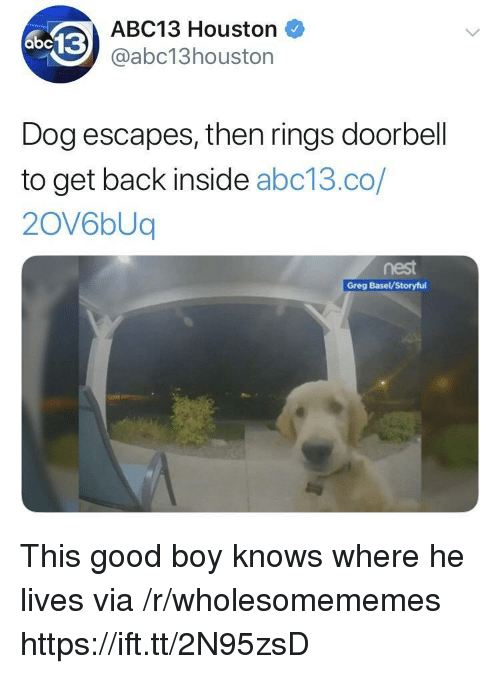 Abc13, Good, and Houston: ABC13 Houston  @abc13houston  Dog escapes, then rings doorbell  to get back inside abc13.co/  2OV6bUq  nest  Greg Basel/Storyful This good boy knows where he lives via /r/wholesomememes https://ift.tt/2N95zsD