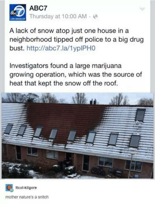 Drugs, Police, and Snitch: ABC7  Thursday at 10:00 AM  A lack of snow atop just one house in a  neighborhood tipped off police to a big drug  bust  http://abc7.la/1yplPHO  Investigators found a large marijuana  growing operation, which was the source of  heat that kept the snow off the roof.  Itcol-kilgore  mother nature's a snitch
