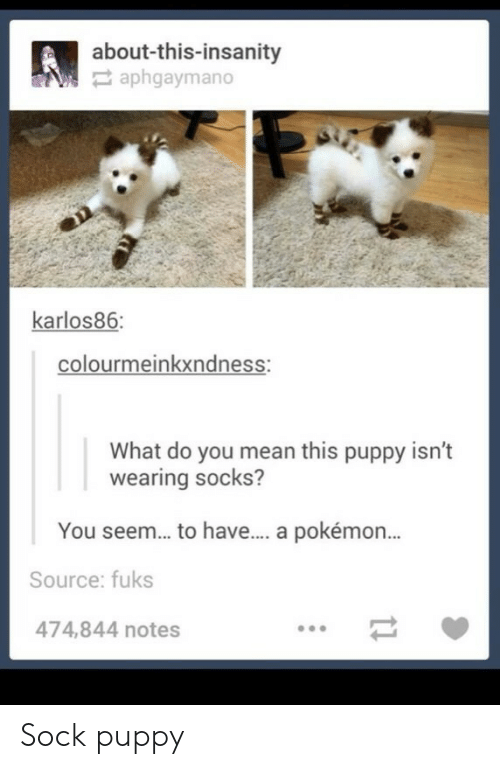 Fuks: about-this-insanity  aphgaymano  karlos86  colourmeinkxndness:  What do you mean this puppy isn't  wearing socks?  You seem... to have... a pokémon...  Source: fuks  474,844 notes Sock puppy