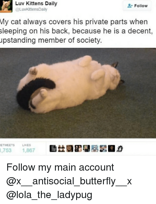 Memes, 🤖, and Cat: Abuy Daily  @LuvKittensDaily  Follow  My cat always covers his private parts when  sleeping on his back, because he is a decent,  upstanding member of society.  ETWEETS  LIKES  ,753 1,867 Follow my main account @x__antisocial_butterfly__x @lola_the_ladypug