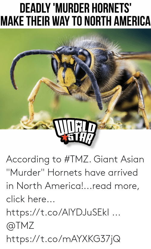 "Asian: According to #TMZ.  Giant Asian ""Murder"" Hornets have arrived in North America!...read more, click here... https://t.co/AlYDJuSEkI ... @TMZ https://t.co/mAYXKG37jQ"