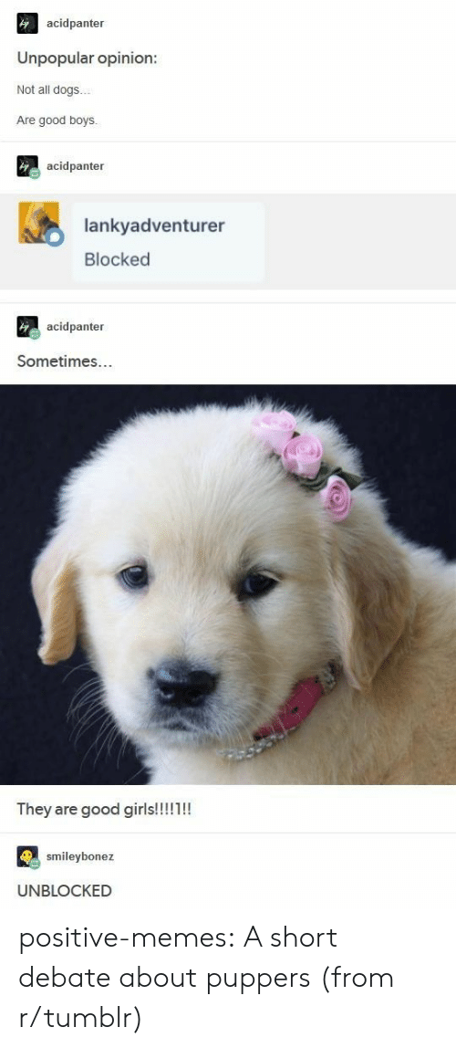 Unblocked: acidpanter  Unpopular opinion:  Not all dogs..  Are good boys  acidpanter  lankyadventurer  Blocked  acidpanter  Sometimes...  ey are good giris  smileybonez  UNBLOCKED positive-memes:  A short debate about puppers (from r/tumblr)