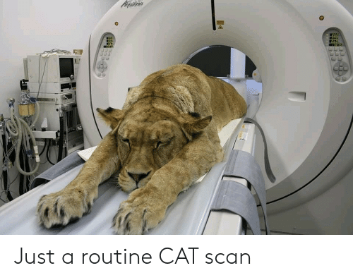 Cat, Cat Scan, and Just: Acpuilion Just a routine CAT scan