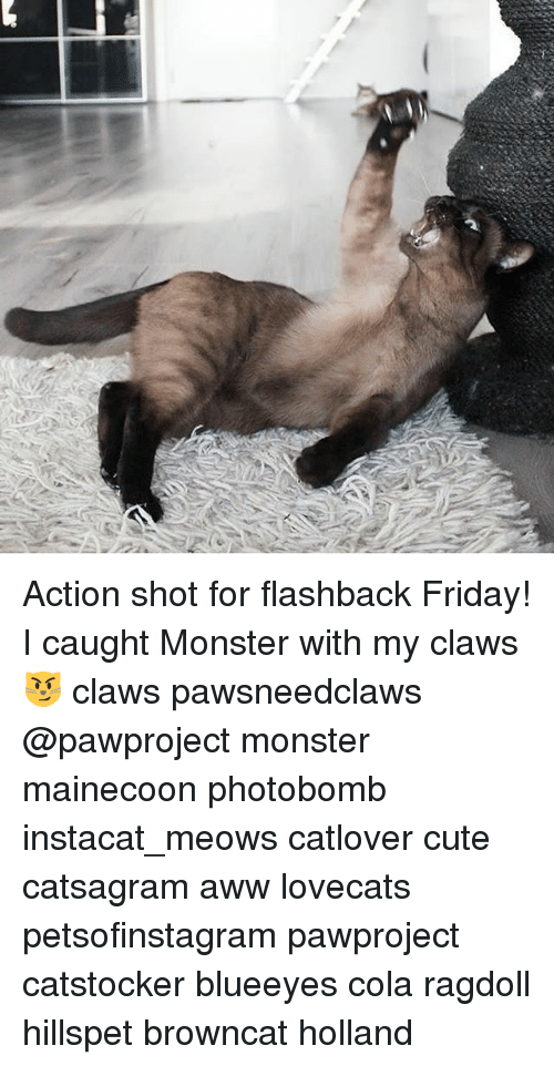 Aww, Cute, and Friday: Action shot for flashback Friday! I caught Monster with my claws 😼 claws pawsneedclaws @pawproject monster mainecoon photobomb instacat_meows catlover cute catsagram aww lovecats petsofinstagram pawproject catstocker blueeyes cola ragdoll hillspet browncat holland