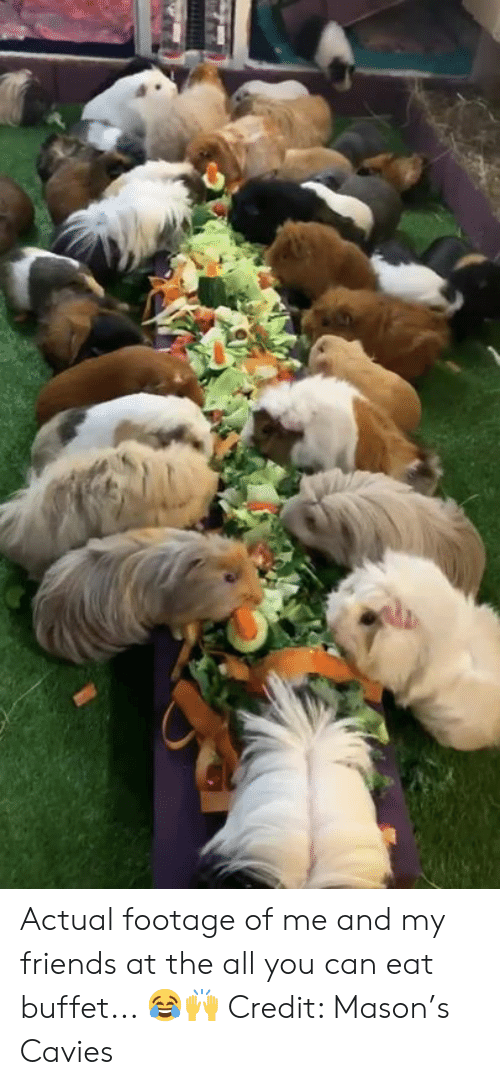 The All: Actual footage of me and my friends at the all you can eat buffet... 😂🙌  Credit: Mason's Cavies