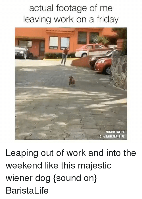 Dogs, Friday, and Life: actual footage of me  leaving work on a friday  #BARISTALIFE  IG: @BARISTA LIFE Leaping out of work and into the weekend like this majestic wiener dog {sound on} BaristaLife