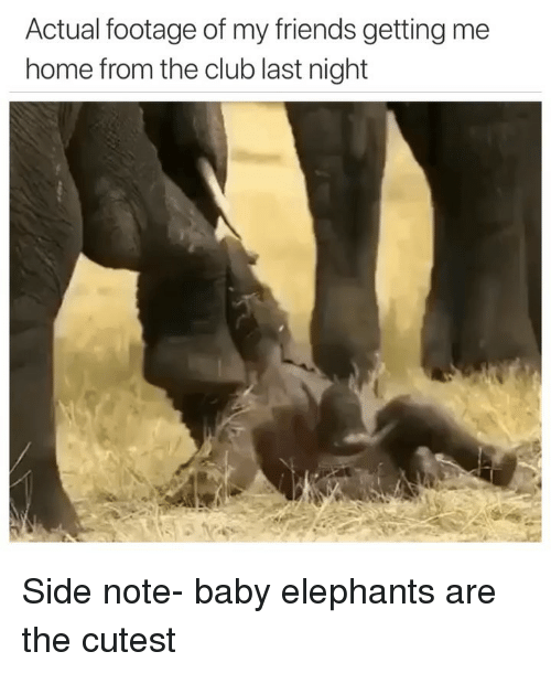 Baby Elephants: Actual footage of my friends getting me  home from the club last night Side note- baby elephants are the cutest