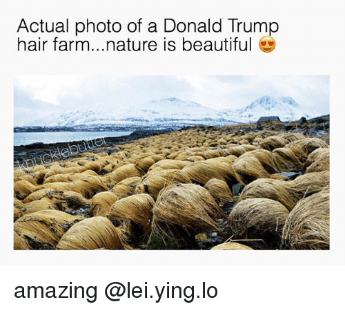 trump hair: Actual photo of a Donald Trump  hair farm...nature is beautiful amazing @lei.ying.lo