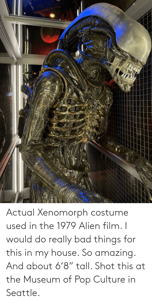 """so amazing: Actual Xenomorph costume used in the 1979 Alien film. I would do really bad things for this in my house. So amazing. And about 6'8"""" tall. Shot this at the Museum of Pop Culture in Seattle."""