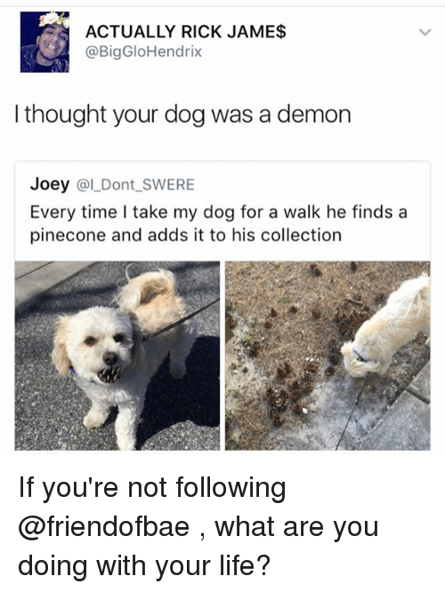 Funny, Life, and Meme: ACTUALLY RICK JAME$  @BigGloHendrix  I thought your dog was a demon  Joey  (al Dont SWERE  Every time take my dog for a walk he finds a  pinecone and adds it to his collection If you're not following @friendofbae , what are you doing with your life?