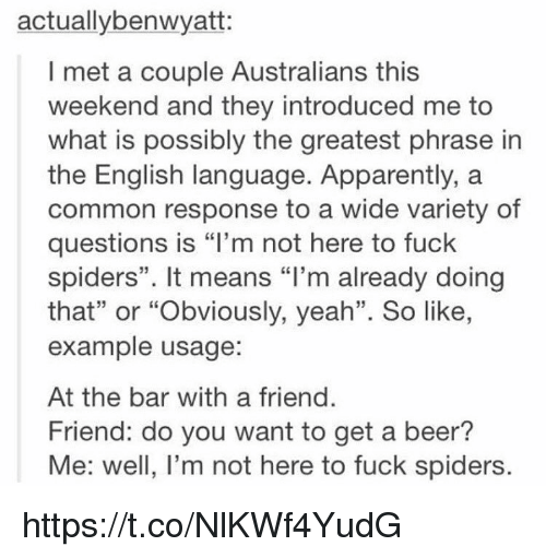 """Friendly Friend: actuallybenwyatt:  I met a couple Australians this  weekend and they introduced me to  what is possibly the greatest phrase in  the English language. Apparently, a  common response to a wide variety of  questions is """"I'm not here to fuck  spiders"""". It means """"I'm already doing  that"""" or """"Obviously, yeah"""". So like,  example usage:  At the bar with a friend.  Friend: do you want to get a beer?  Me: well, I'm not here to fuck spiders. https://t.co/NlKWf4YudG"""