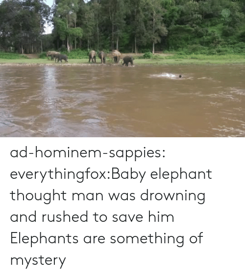 Elephant: ad-hominem-sappies:  everythingfox:Baby elephant thought man was drowning and rushed to save him  Elephants are something of mystery