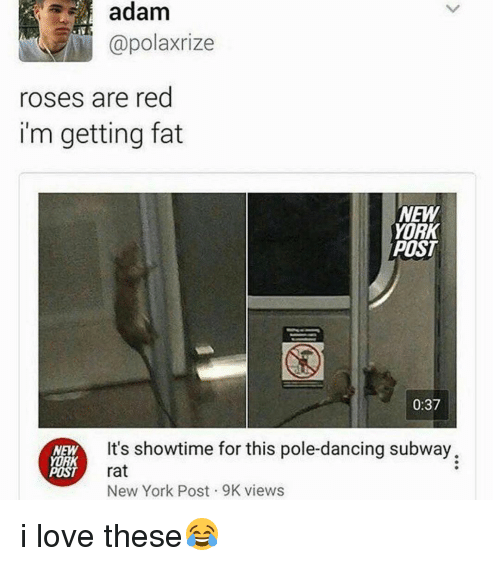 pole dancing: adam  Capolaxrize  roses are red  im getting fat  NEW  YORK  POST  0:37  It's showtime for this pole-dancing subway.  NEW  YORK  POST  rat  New York Post 9K views i love these😂