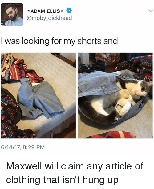 Head, Memes, and Dick: ADAM ELLIS  @moby dick head  I was looking for my shorts and  6/14/17, 8:29 PM Maxwell will claim any article of clothing that isn't hung up.
