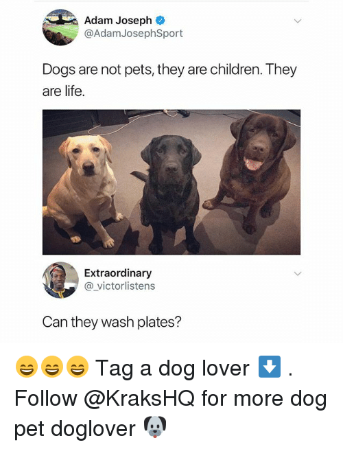 dog lovers: Adam Joseph  @AdamJosephSport  Dogs are not pets, they are children. They  are life.  Extraordinary  @victorlistens  Can they wash plates? 😄😄😄 Tag a dog lover ⬇️ . Follow @KraksHQ for more dog pet doglover 🐶