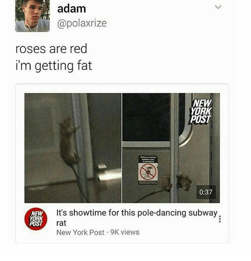 pole dancing: adam  @polaxrize  roses are red  i'm getting fat  NEW  YORK  POST  0:37  It's showtime for this pole-dancing subway.  NEW  YORK  rat  POST  New York Post 9K views
