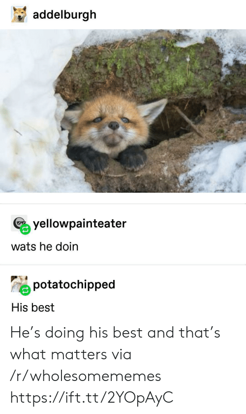 Doin: addelburgh  yellowpainteater  wats he doin  potatochipped  His best He's doing his best and that's what matters via /r/wholesomememes https://ift.tt/2YOpAyC
