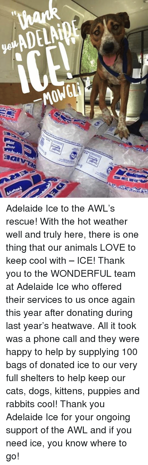 keeping cool: ADELAiBE  _MOWGLi  제alv73a Adelaide Ice to the AWL's rescue!  With the hot weather well and truly here, there is one thing that our animals LOVE to keep cool with – ICE!  Thank you to the WONDERFUL team at Adelaide Ice who offered their services to us once again this year after donating during last year's heatwave.  All it took was a phone call and they were happy to help by supplying 100 bags of donated ice to our very full shelters to help keep our cats, dogs, kittens, puppies and rabbits cool!  Thank you Adelaide Ice for your ongoing support of the AWL and if you need ice, you know where to go!