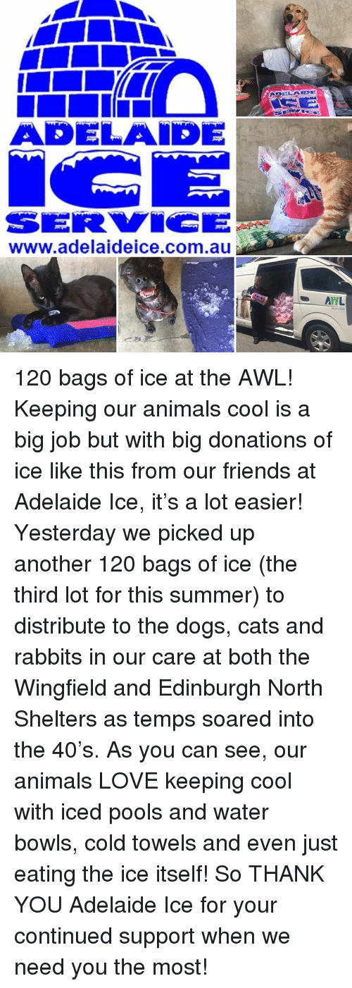 keeping cool: ADELAIDE  www.adelaideice.com.au  AHL 120 bags of ice at the AWL!  Keeping our animals cool is a big job but with big donations of ice like this from our friends at Adelaide Ice, it's a lot easier!  Yesterday we picked up another 120 bags of ice (the third lot for this summer) to distribute to the dogs, cats and rabbits in our care at both the Wingfield and Edinburgh North Shelters as temps soared into the 40's.  As you can see, our animals LOVE keeping cool with iced pools and water bowls, cold towels and even just eating the ice itself!  So THANK YOU Adelaide Ice for your continued support when we need you the most!