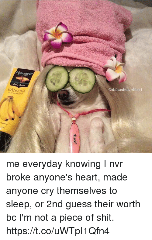chihuahuas: Adler  BANANA  @chihuahua chloel me everyday knowing I nvr broke anyone's heart, made anyone cry themselves to sleep, or 2nd guess their worth bc I'm not a piece of shit. https://t.co/uWTpI1Qfn4
