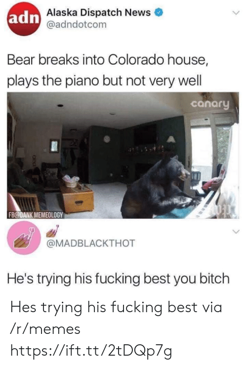 wel: adn  Alaska Dispatch News  @adndotcom  Bear breaks into Colorado house,  plays the piano but not very wel  canary  FB@DANK MEMEOLOGY  @MADBLACKTHOT  He's trying his fucking best you bitch Hes trying his fucking best via /r/memes https://ift.tt/2tDQp7g