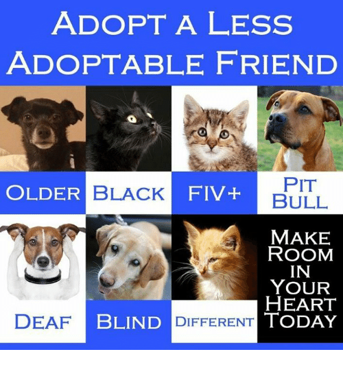Memes, Bulls, and 🤖: ADOPT A LESS  ADOPTABLE FRIEND  OLDER  BLACK  FIV PIT  BULL  MAKE  ROOM  IN  YOUR  HEART  DEAF  BLIND DIFFERENT TODAY