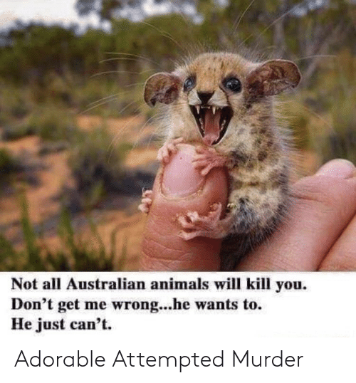 Murder: Adorable Attempted Murder