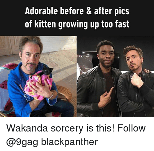 9gag, Growing Up, and Memes: Adorable before & after pics  of kitten growing up too fast  S WE ALL Wakanda sorcery is this! Follow @9gag blackpanther