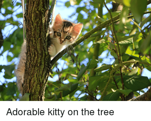 Tree, Adorable, and Kitty