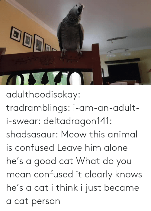 Good Cat: adulthoodisokay: tradramblings:  i-am-an-adult-i-swear:  deltadragon141:  shadsasaur: Meow  this animal is confused   Leave him alone he's a good cat   What do you mean confused it clearly knows he's a cat  i think i just became a cat person