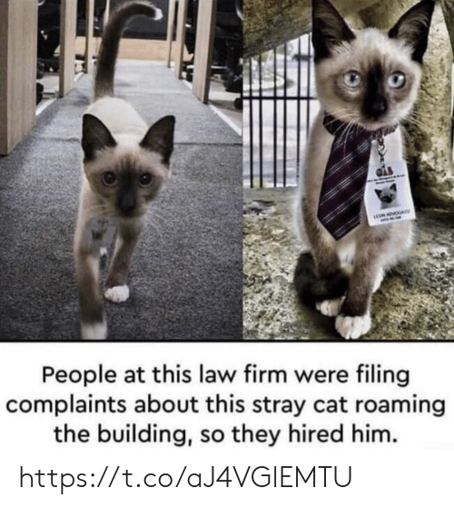 Hired: ADVA  People at this law firm were filing  complaints about this stray cat roaming  the building, so they hired him. https://t.co/aJ4VGlEMTU