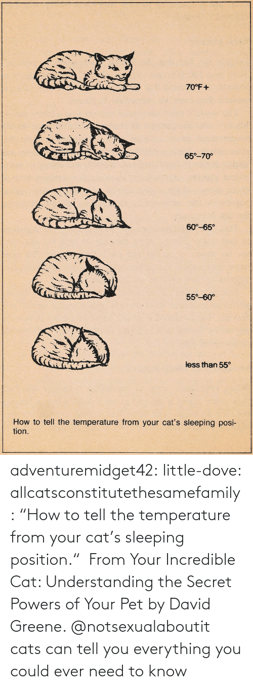 "pet: adventuremidget42: little-dove:  allcatsconstitutethesamefamily: ""How to tell the temperature from your cat's sleeping position.""  From Your Incredible Cat: Understanding the Secret Powers of Your Pet by David Greene.    @notsexualaboutit   cats can tell you everything you could ever need to know"