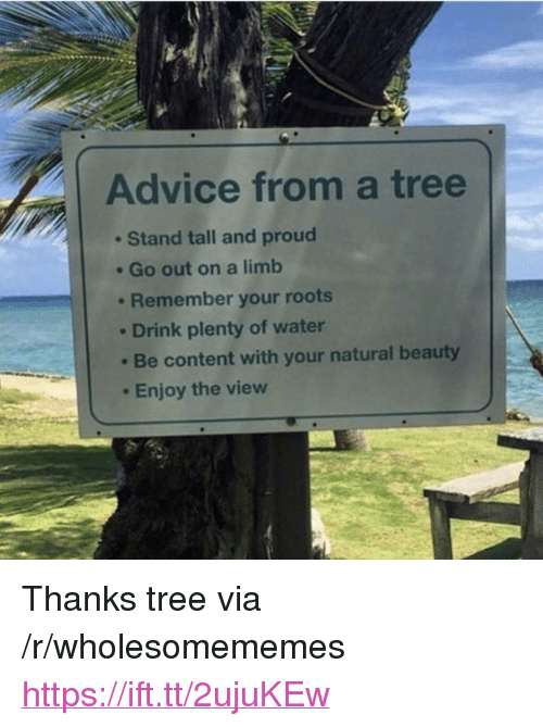 """The View: Advice from a tree  Stand tall and proud  . Go out on a limb  . Remember your roots  Drink plenty of water  Be content with your natural beauty  Enjoy the view <p>Thanks tree via /r/wholesomememes <a href=""""https://ift.tt/2ujuKEw"""">https://ift.tt/2ujuKEw</a></p>"""
