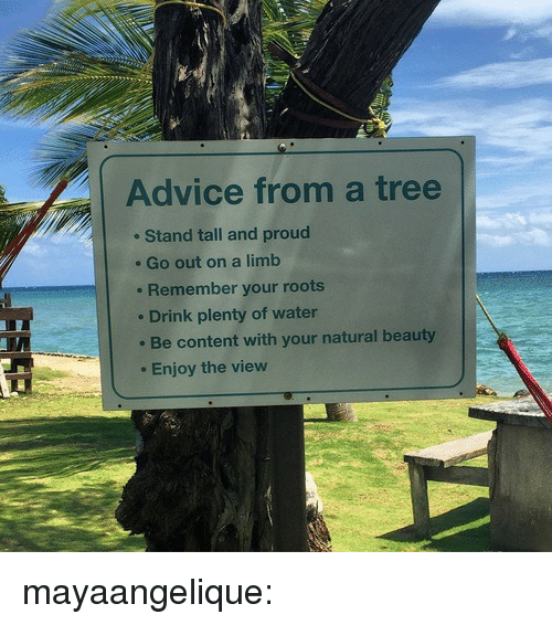 Advice, Gif, and Tumblr: Advice from a tree  Stand tall and proud  . Go out on a limb  Remember your roots  Drink plenty of water  Be content with your natural beauty  . Enjoy the view mayaangelique: