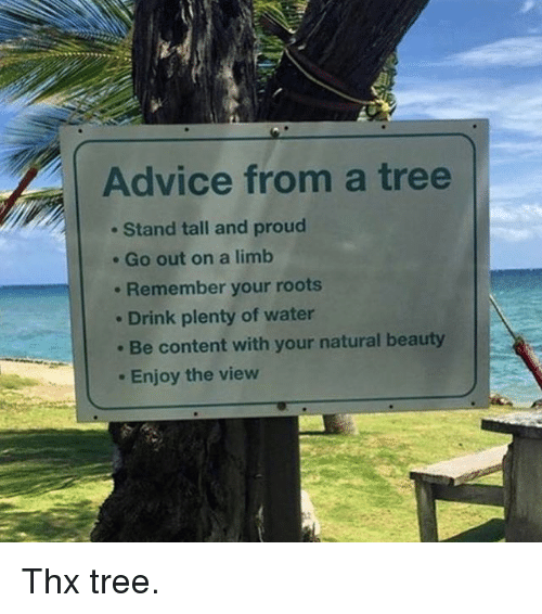 Advice, Funny, and The View: Advice from a tree  Stand tall and proud  Go out on a limb  Remember your roots  Drink plenty of water  Be content with your natural beauty  Enjoy the view Thx tree.