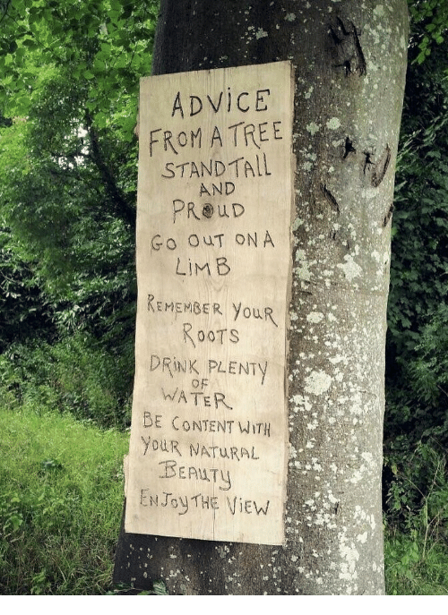 Advice, Tree, and Water: ADViCE  FROM A TREE  STANDTALL  AND  PROuD  Go OUT ON A  REMEMBER YouR  DRINK PLENTY  WATER  BE CONTENT WITH  YouR NATURAL  BEALTY