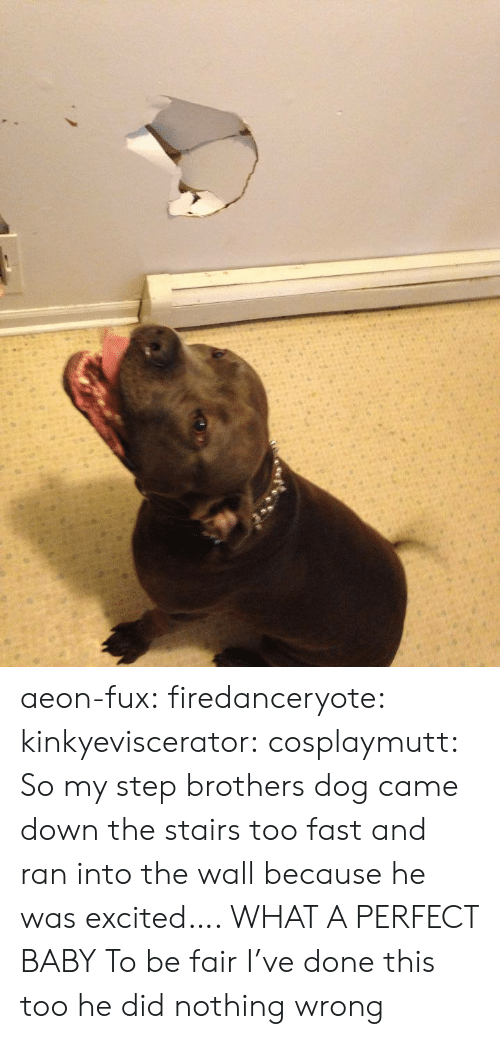 Step Brothers: aeon-fux:  firedanceryote:  kinkyeviscerator:  cosplaymutt:  So my step brothers dog came down the stairs too fast and ran into the wall because he was excited….   WHAT A PERFECT BABY  To be fair I've done this too  he did nothing wrong