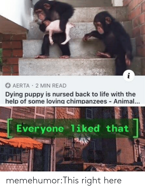 Life, Tumblr, and Animal: AERTA · 2 MIN READ  Dying puppy is nursed back to life with the  help of some loving chimpanzees Animal...  Everyone liked that memehumor:This right here