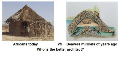 Architect: Africans today  VS  Who is the better architect?  Beavers millions of years ago