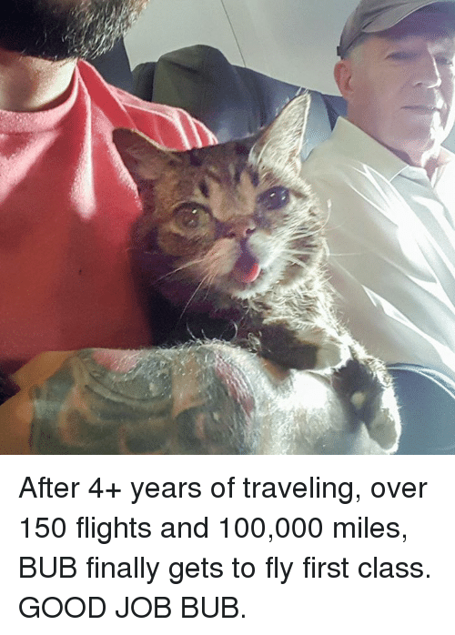 Finals, Memes, and Flight: After 4+ years of traveling, over 150 flights and 100,000 miles, BUB finally gets to fly first class. GOOD JOB BUB.